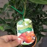 Mandarin Imperial