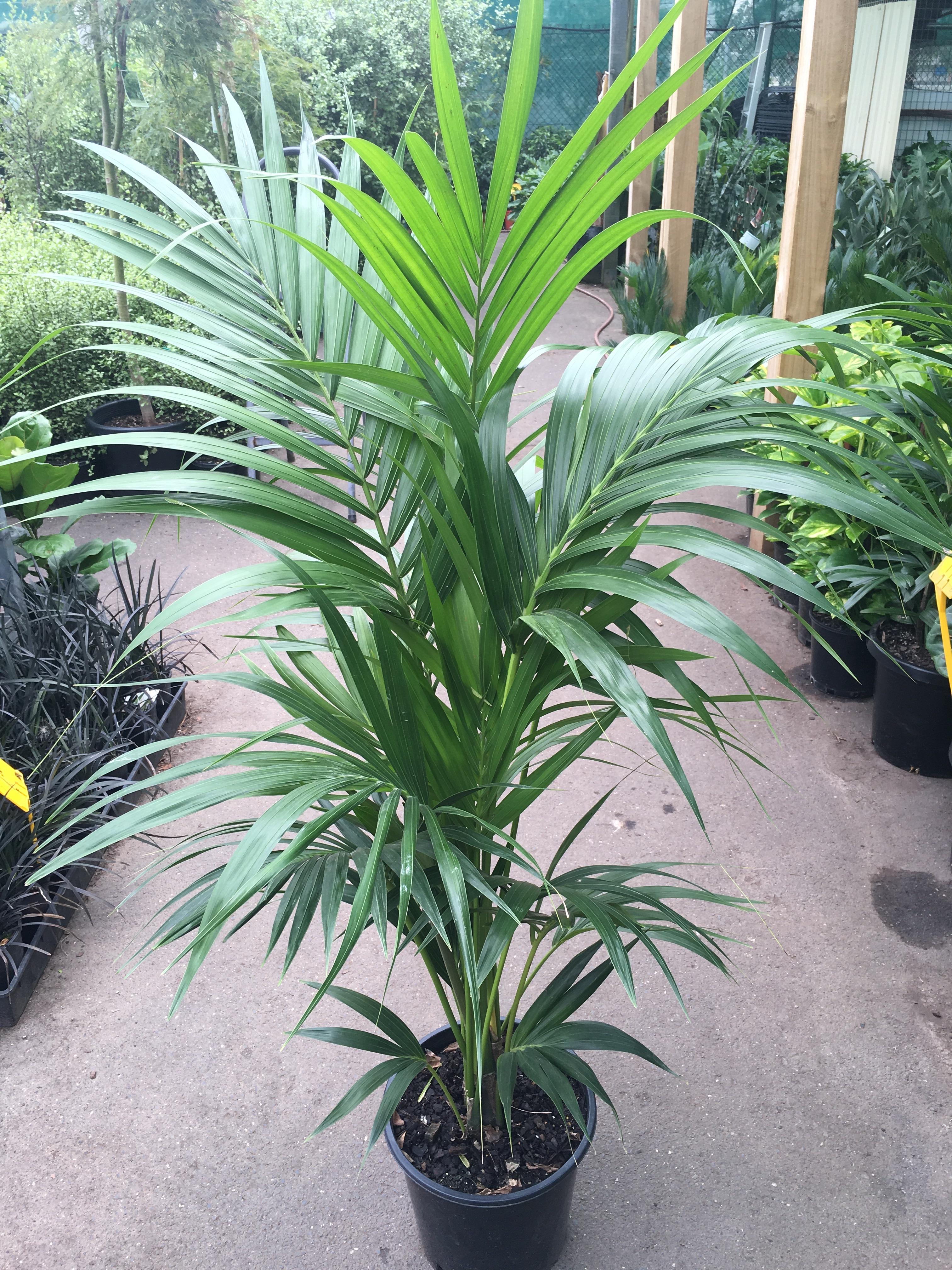 Best plants for no sunlight rent indoor plants that - Plants that need no sunlight ...